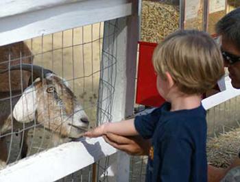 Petting Zoo Northern Virginia