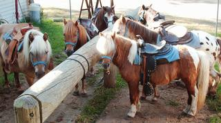 Pony Party Virginia