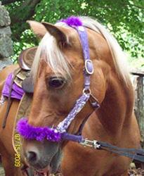 Pony Rides Northern Virginia